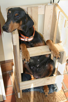 Primary Auto Group >> The Senior Doberman Project